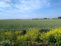 Champ de blé encadré des prés sauvages photographie stock