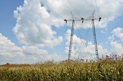 Champ de blé et puissance Polonais Photo libre de droits