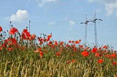 Champ de blé et puissance Polonais Photos stock