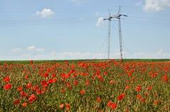 Champ de blé et puissance Polonais Image libre de droits