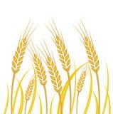 Champ de blé - illustration Photo stock