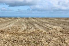 Champ de blé moissonné sur l'océan Photos stock