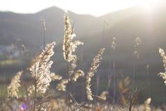 Champ de blé sur la montagne Images libres de droits