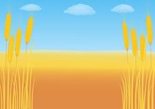Champ de blé sur un fond de ciel bleu Image libre de droits