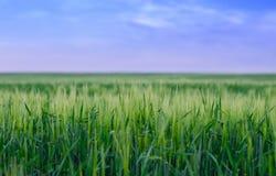 Champ de blé, Ukraine photos stock