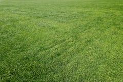 Champ de blé vert aérien Grand champ vert de vue aérienne Images stock