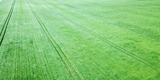 Champ de blé vert aérien Grand champ vert de vue aérienne Photo libre de droits