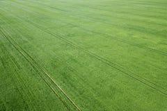 Champ de blé vert aérien Grand champ vert de vue aérienne Photographie stock libre de droits
