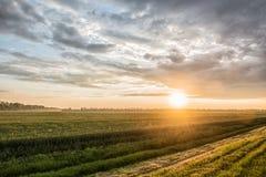 Champ de blé vert au coucher du soleil Photos libres de droits