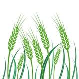 Champ de blé vert - illustration Image libre de droits