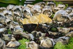 Champ de cablage à couches multiples d'huître Photo stock