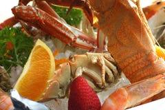 Champ de cablage à couches multiples de fruits de mer Photo libre de droits