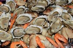 Champ de cablage à couches multiples de fruits de mer Photos stock