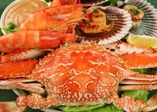 Champ de cablage à couches multiples de fruits de mer Image stock