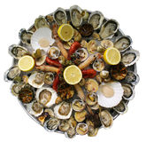 Champ de cablage à couches multiples de fruits de mer de mollusques et crustacés Photos stock
