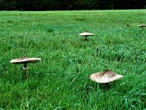 Champ de champignon Photographie stock