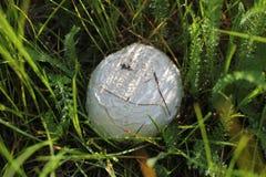 Champ de champignon Images stock