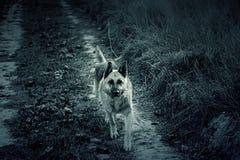Champ de chien de loup Image libre de droits