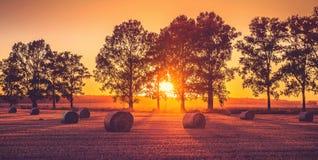 Champ de coucher du soleil Photo stock