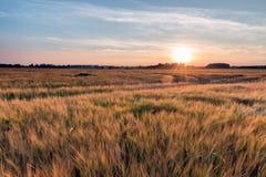 Champ de coucher du soleil d'été image libre de droits