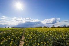 Champ de coup sec et dur et de ciel ensoleillé Photographie stock