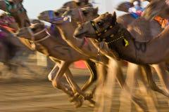 Champ de courses de chameau de Marmoum d'Al, Dubaï Photo stock