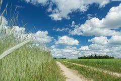 Champ de ferme de seigle d'été sous les cirrus blancs et le ciel lumineux bleu Image libre de droits