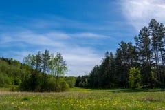 Champ de forêt Photographie stock libre de droits