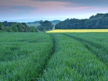champ de grain Image libre de droits