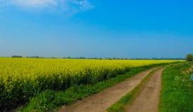 Champ de graine de colza avec la manière de chemin photos stock