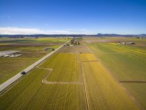 Champ de jonquille de vallée de Skagit Images stock