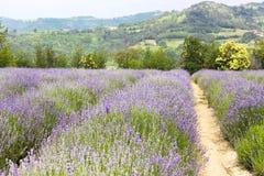 Champ de lavande en Provence image stock