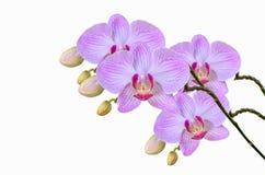 Champ de lotus Photographie stock libre de droits