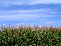 Champ de maïs Images stock