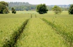 Champ de maïs anglais image stock