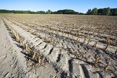 Champ de maïs après récolte au loin Photographie stock libre de droits