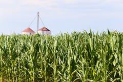 Champ de maïs aux Etats-Unis Photos libres de droits