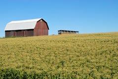 Champ de maïs avec la grange Image libre de droits