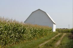 Champ de maïs avec la grange Photographie stock