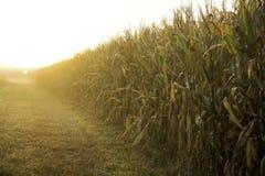 Champ de maïs de Hoosier Photos libres de droits