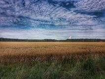 Champ de maïs et beau ciel Image libre de droits