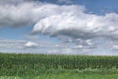 Champ de maïs et ciel nuageux Images libres de droits