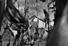 Champ de maïs et grange Photos libres de droits