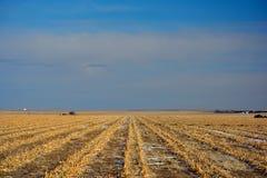 Champ de maïs labouré de ferme en hiver Photographie stock libre de droits