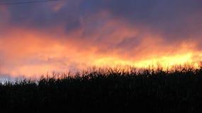 Champ de maïs mystique photos stock