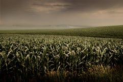 Champ de maïs orageux Image libre de droits