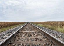 Champ de maïs par les voies ferrées photos libres de droits