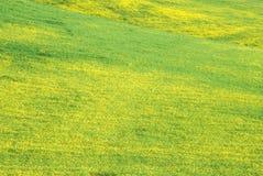 Champ de moutarde en fleur, lac Casitas, Ojai, CA Photo stock