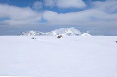 Champ de Mudoro en novembre avec le fond de montagne de neige Photos libres de droits