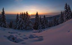 Champ de neige de coucher du soleil d'hiver sur la montagne avec les pins givrés sur le fond de la forêt et des collines de taiga Photographie stock